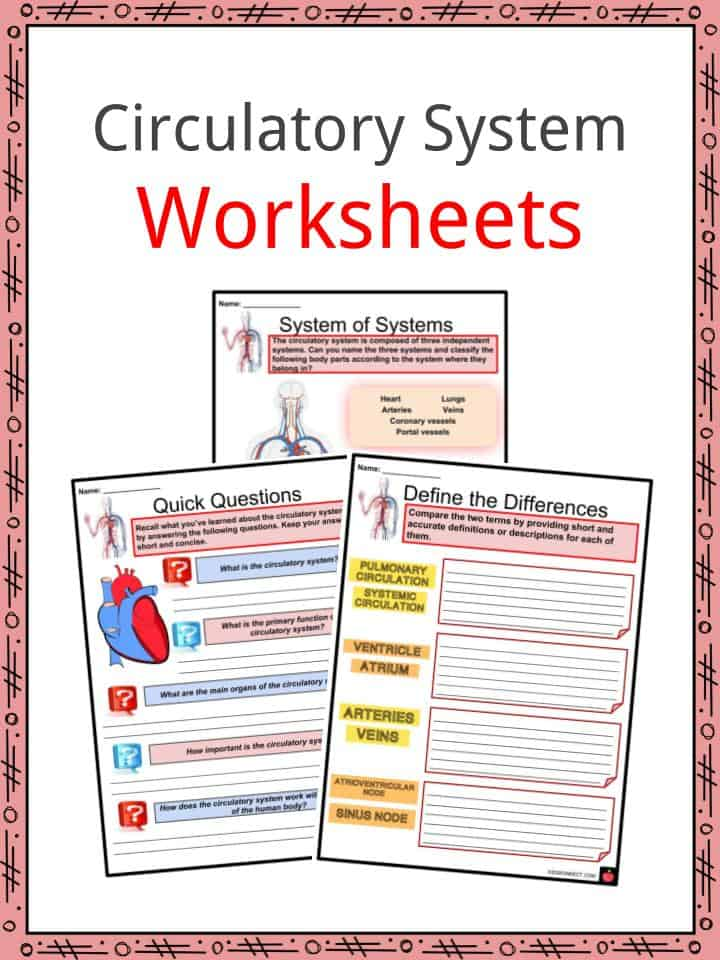 Circulatory system facts worksheets cycle heartbeat for kids reading comprehensiondf amazing