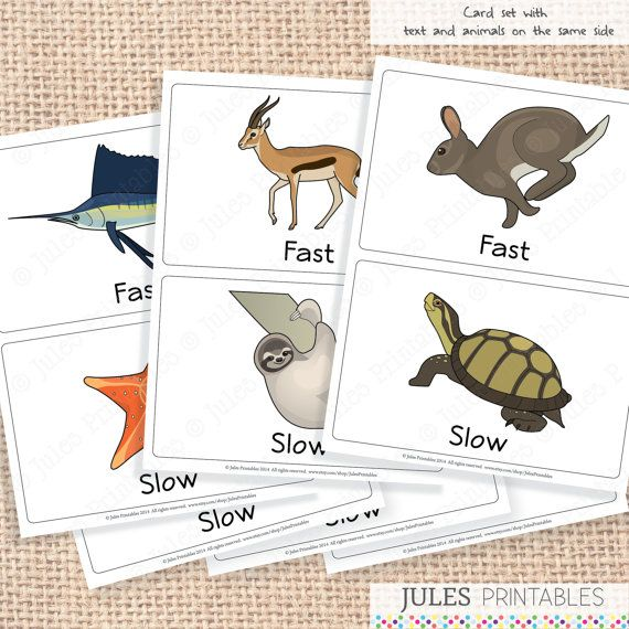 Fast and slow worksheets for kindergarten phenomenal photo ideas pin on art