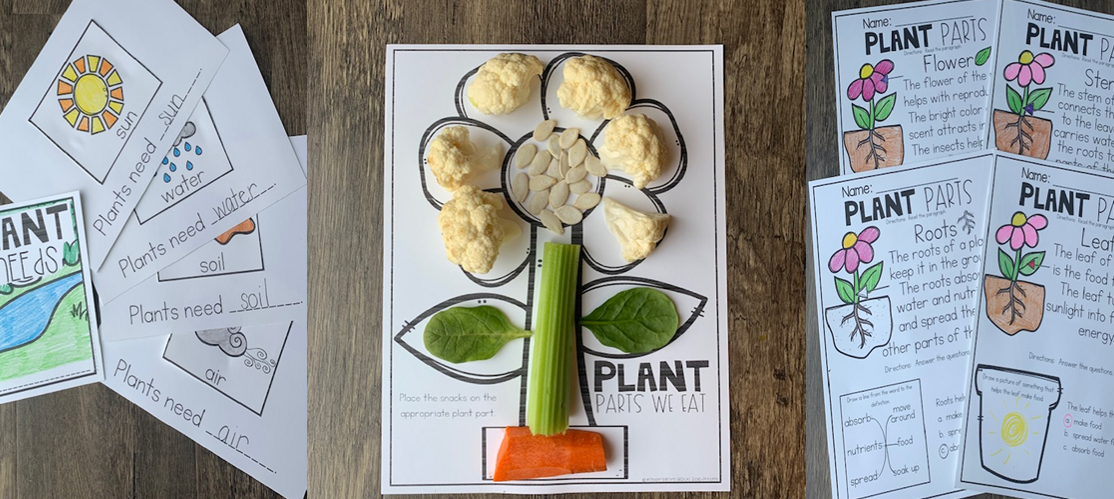 Plantets for kindergarten types of plants life cycle freeet english